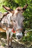 Nahaufnahme des Esels Stockfotos