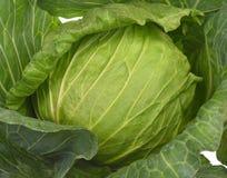 Nahaufnahme des frischen Kohls im Gemüsegarten stockfotos