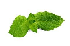 Nahaufnahme des frischen tadellosen Kräuterzweigs lokalisiert auf dem weißen Hintergrund Bunte grüne Minze für Sommercocktails un stockfoto