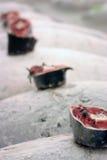 Nahaufnahme des gefrorenen Thunfischs an der Auktion in Tokyo stockfotografie