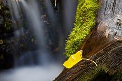 Nahaufnahme des gelben Blattes mit langsamem unscharfem Wasser Stockfotografie