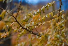 Nahaufnahme des goldenen Laubs des Herbstes mit einem weichen unscharfen Hintergrund stockbilder