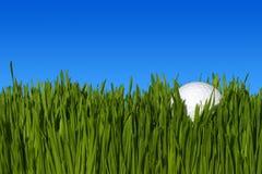 Nahaufnahme des Golfballs auf Gras Stockfotos