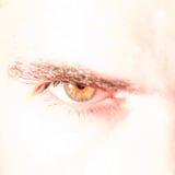 Nahaufnahme des grünen Auges stockfotos