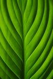 Nahaufnahme des grünen Blattes Stockfotos