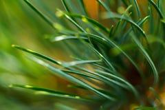 Nahaufnahme des grünen Grases Stockbilder