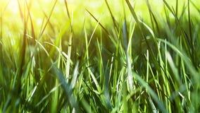 Nahaufnahme des grünen Grases Feld des grünen Grases gegen einen blauen Himmel mit wispy weißen Wolken Schieberschuß stock video footage