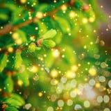 Nahaufnahme des grünen Weihnachten-Baums Abstraktes Hintergrundmuster der weißen Sterne auf dunkelroter Auslegung Stockfotografie