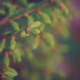 Nahaufnahme des grünen Weihnachten-Baums Abstraktes Hintergrundmuster der weißen Sterne auf dunkelroter Auslegung Getontes retr Stockfotografie