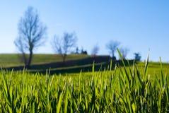 Nahaufnahme des Grases auf einem Gebiet Stockbild