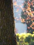 Nahaufnahme des großen Baums mit Vorstadtnachbarschaft im Hintergrund stockfoto