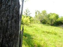 Nahaufnahme des hölzernen Beitrags mit Bäumen im Hintergrund Lizenzfreies Stockfoto