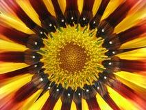 Nahaufnahme des Heizfadens der Blume Lizenzfreie Stockbilder