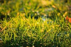 Nahaufnahme des hintergrundbeleuchteten Grases Lizenzfreie Stockfotos
