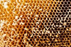 Nahaufnahme des Honigkammes an einem sonnigen Tag Lizenzfreie Stockbilder