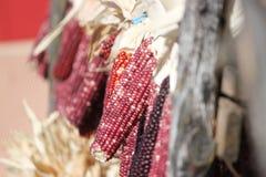 Nahaufnahme des indischen Mais Stockbild