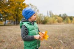 Nahaufnahme des jungen Jungen spielend mit herbstlichen Blättern Stockfotografie