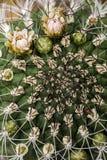 Nahaufnahme des Kaktus Stockfotografie