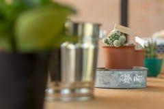 Nahaufnahme des Kaktus mit Flagge Stockfotografie