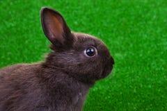 Nahaufnahme des Kaninchens Lizenzfreie Stockfotos