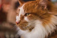 Nahaufnahme des Katzengesichtes schauend nach links lizenzfreie stockbilder
