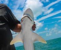 Nahaufnahme des kleinen Haifischs hielt durch Fischer auf Hochseefischereiboot lizenzfreies stockfoto
