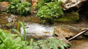 Nahaufnahme des kleinen quaiet Waldwasserfalls stock footage