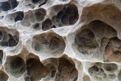 Nahaufnahme des korallenroten Sediments versteinert stockbilder