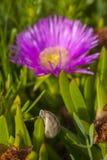 Nahaufnahme des Nagels mit rosa Blume im Hintergrund Stockfoto
