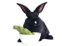 Nahaufnahme des netten schwarzen Kaninchenessens Stockfotografie