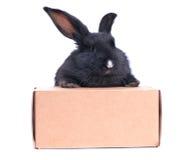Nahaufnahme des netten schwarzen Kaninchens Stockbild