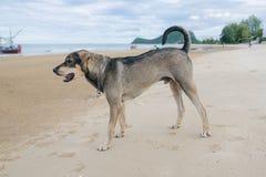 Nahaufnahme des obdachlosen Hundes auf dem Strand Lizenzfreie Stockfotos