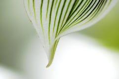 Nahaufnahme des Orchideeblumenblattes lizenzfreie stockfotografie