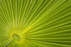 Nahaufnahme des Palmblatmusters Stockbilder