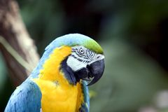 Nahaufnahme des Papageien Lizenzfreie Stockbilder