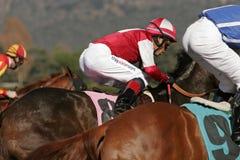 Nahaufnahme des Pferden-Rennens Lizenzfreies Stockfoto