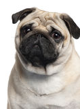 Nahaufnahme des Pug, 2 Jahre alt Lizenzfreie Stockfotos