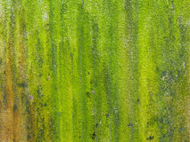 Nahaufnahme des rauen grünen strukturierten Hintergrundes und des boke Lizenzfreies Stockbild