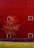 Nahaufnahme des roten Stalles mit Fall-Baum Stockfotos
