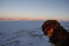 Nahaufnahme des schönen Hundes Lizenzfreies Stockfoto