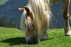 Nahaufnahme des schönen Pferdeessens Lizenzfreie Stockfotos