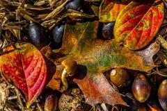 Nahaufnahme des schönen verwickelten Herbstlaubs Lizenzfreie Stockfotos