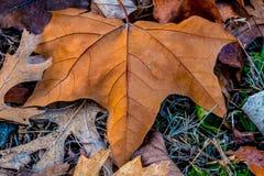 Nahaufnahme des schönen verwickelten Herbstlaubs Lizenzfreies Stockbild