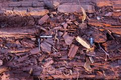 Nahaufnahme des schimmelnden Baumstammes stockfotos