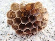 Nahaufnahme des Stückes der Bienenwabe Lizenzfreie Stockbilder