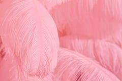 Nahaufnahme des Stapels der rosa flaumigen Federn Lizenzfreies Stockfoto