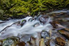Nahaufnahme des Stromes in Tollymore-Wald stockfoto