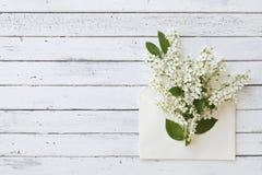 Nahaufnahme des Umschlags mit schönen blühenden Baumasten auf weißem hölzernem Hintergrund Stockfotografie
