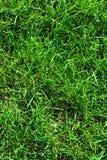 Nahaufnahme des ungebildeten wilden grünen Rasens Ansicht von oben Grüner saftiger Grashintergrund für Frühling und Sommer Stockfoto
