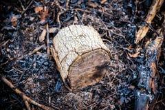 Nahaufnahme des verkohlten Klotzes, der in gebrannten Blättern nach kontrolliertem Brand in den Waldschutzgebieten sitzt stockbild